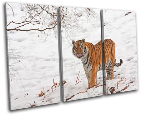 Tiger Wildlife Animals - 13-1494(00B)-TR32-LO
